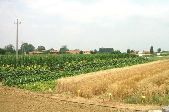 Bollettino agrofenologico