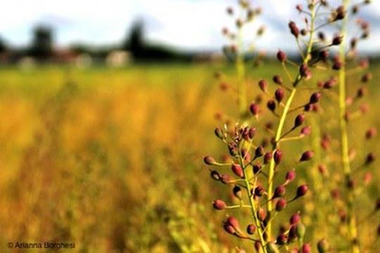 Agricoltura conservativa nel bacino del Mediterraneo per fronteggiare gli effetti del cambiamento climatico