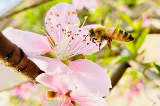 Nel DNA del miele il segreto per proteggere l'ape italiana