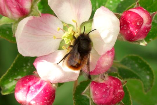 """""""Ogni ape conta"""": un nuovo progetto di monitoraggio delle api solitarie"""